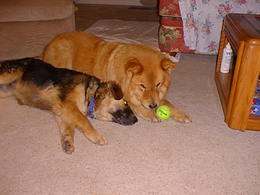 Cookie and Dolly were family members and friends for nearly fourteen years.