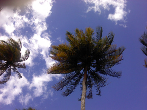 Looking up at the sky while at the beach. Thankfully there were no coconuts on that tree because it was a windy day and one could have definitely fallen and given me a serious concussion or worse!