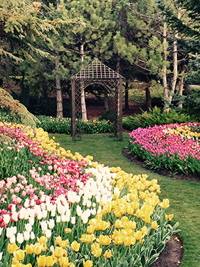 Gazebo and tulips!