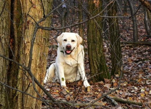 A romp through the woods is not without its dangers.
