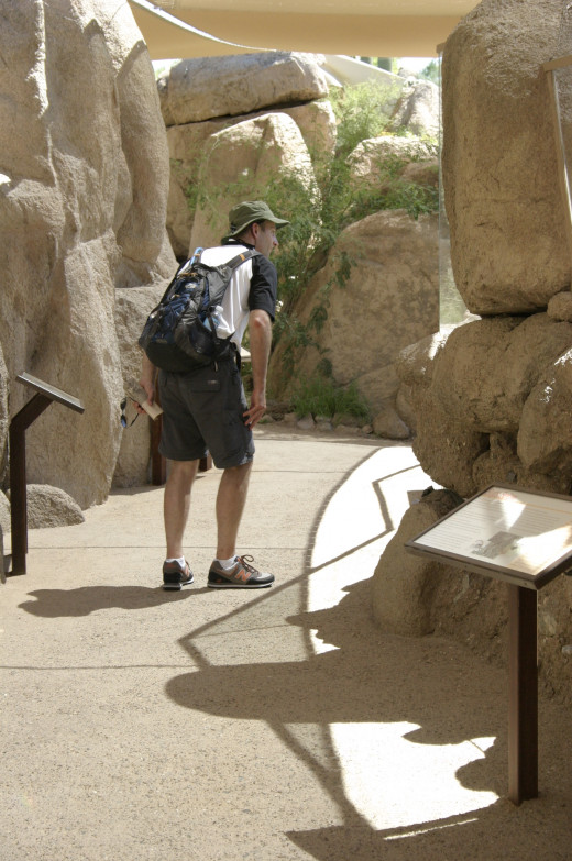 A visitor carefully peaks around a corner, not knowing what lies beyond in the Life on the Rocks exhibit.