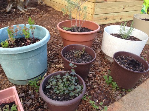 Clockwise from 11 o'clock: cilantro, lavender, rosemary, chives, peppermint (2)