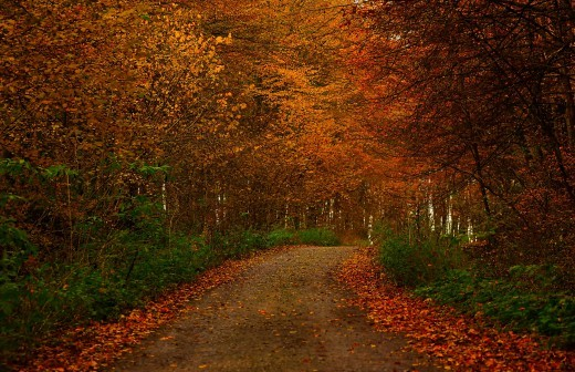 Photograph of a country road during autumn season provided by Carb Diva at HubPages