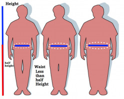Waist to Height Ratio Better than BMI for Checking Body Fat