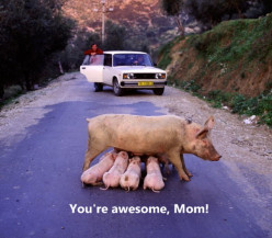 Funny and Unusual Mother's Day Cards and Ads