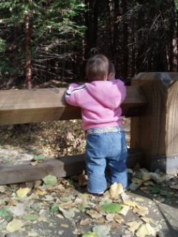 I figured if my little niece had the courage to contemplate going over the fence, certainly, I could actually do it!