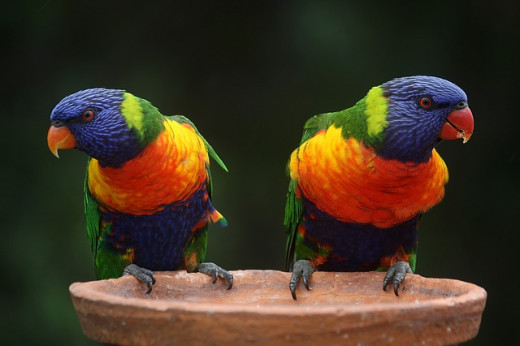 Parrots come in a diverse variety of colors. Did you also know that all gemstones represent a quality? Why not match them up!
