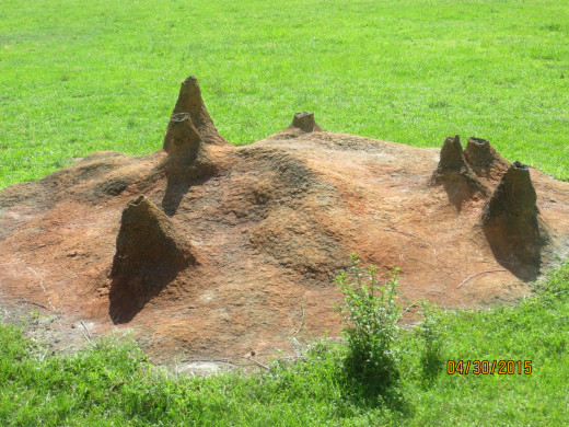Hills made by termites.