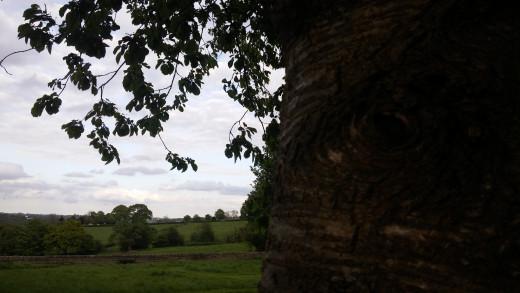 Tree G3