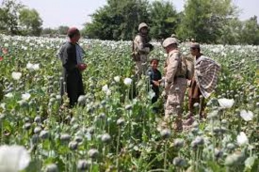 Stop the Drug War! Just make sure our Poppy Profits continue to rise from 2001!!