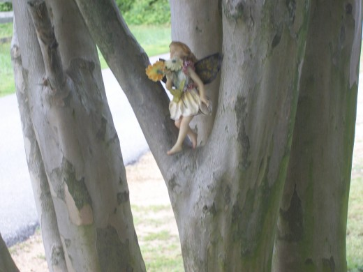 While this is not a real pixie in the tree, the trees in Maryland seem to harbor unseen little people...similar to what is depicted here.