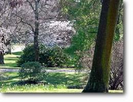 Botanical Gardens ,Christchurch NZ