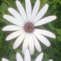 Maina Ndungu profile image