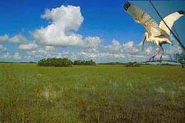 Everglades 'sea of grass'