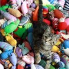 Why Cats Need Toys