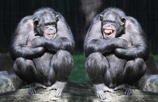 Why don't monkeys get embarrassed when we snap pictures of them naked?