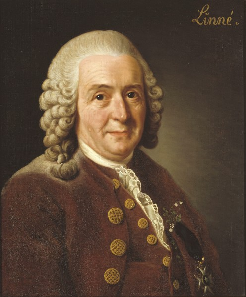 Carl von Linné 1707–1778 Alexander Roslin (1718–1793) [Artist for painting of Carl von Linné.