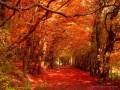 When Autumn Comes Around Each Year
