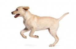 Best Probiotics for Dogs with Diarrhea and Allegries Rated (Top 6)