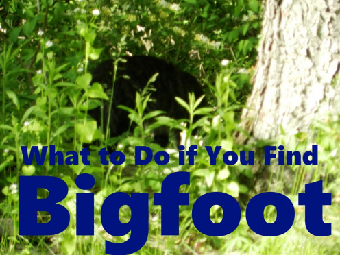 It that Bigfoot lurking in the brush? If it is, what are going to do now that you have found him?