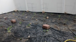 DIY: How to Make a Vegetable Garden That You Won't Have to Weed