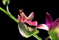 5 Incredibly Beautiful Bugs