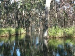Wooroolin Wetlands