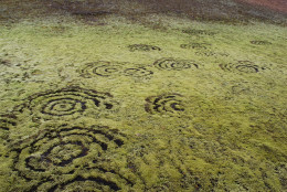 Fairy rings in Iceland