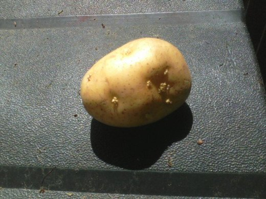 This basic white potato does have eyes but they are still at the surface of the peel. For best growth, the seed potato should sit in a sunny spot until the eyes become stubs or vines.