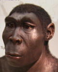 Were Ancient Humans Smarter Than We Think?