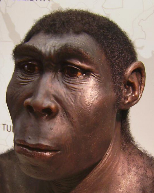 Homo Erectus. Based upon the skull size it is assumed that he was not very smart.