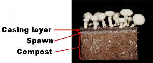 Picture Showing The Soil Layers