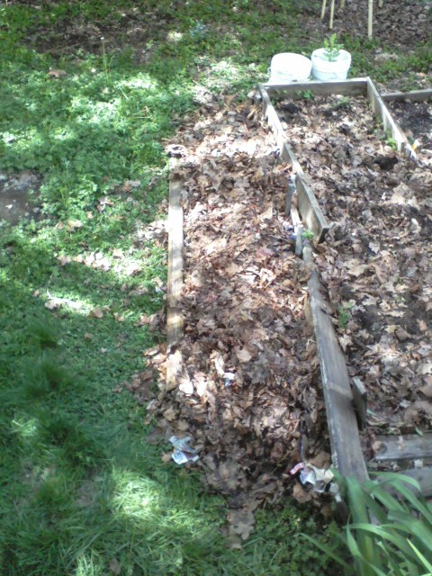 Once I scrounge a bit more repurposed 2X4, I'll have a tider edge at left. Simply watering the bed compressed it all some. Stray leaves blown away will be raked back in place till it all composts together.