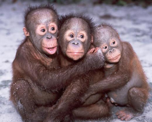 "The Three Monkeys; "" Speak no evil,See no evil ,Hear no evil."""