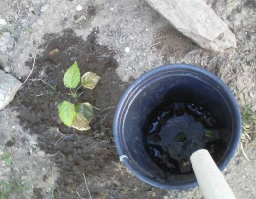 The flow of water is slowed, allowing it to sink in. Also, when the soil crust is hard, water doesn't bounce up and evaporate in the hot summer air.