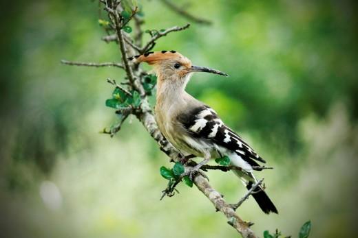 Taken at Rajaji National Park Uttarakhand India.