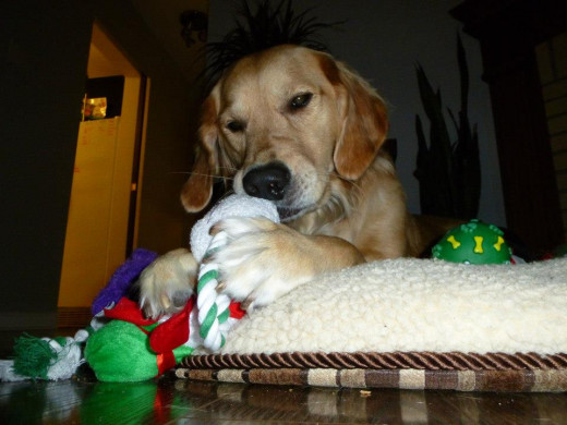 Depending on the severity of your dog's anxiety, you may be able to distract them from the storm using their favorite toys