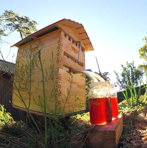 The Flow Hive system, literally puts the honey in the hive on tap, without having to open the hive and remover the frames