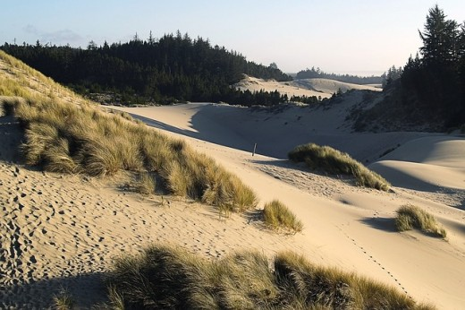 One of the sand dunes parks on the coast.