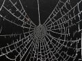 Mystery Revealed: What is the Dark Web?