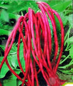 red cowpea