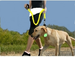 How to Care for Your Dog when Working Out with Him