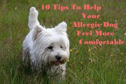 10 Tips To Help An Allergic Dog Feel More Comfortable