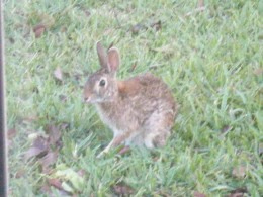 The rabbit is a friendly and fun spirit animal who brings abundance.