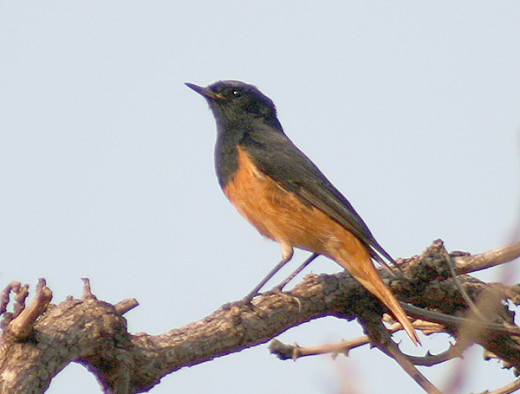 Taken at Bhopal Macdhya Pradesh India.