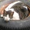 sleepylog profile image