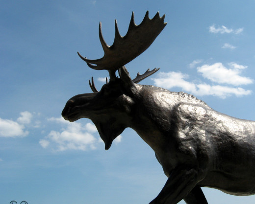 Unfortunately I haven't seen a live moose yet in New England, so I took this photo of a moose statue.