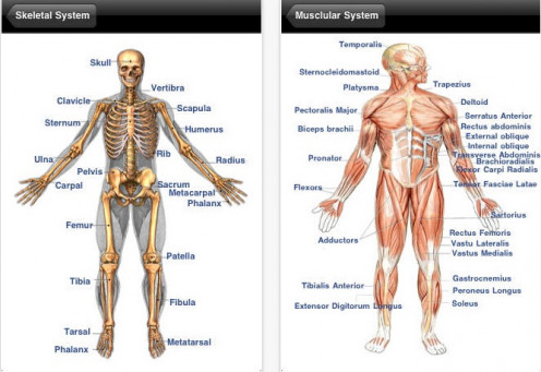 10 Terrific Human Body and Anatomy Websites for Kids | HubPages