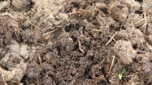 Well-composted manure