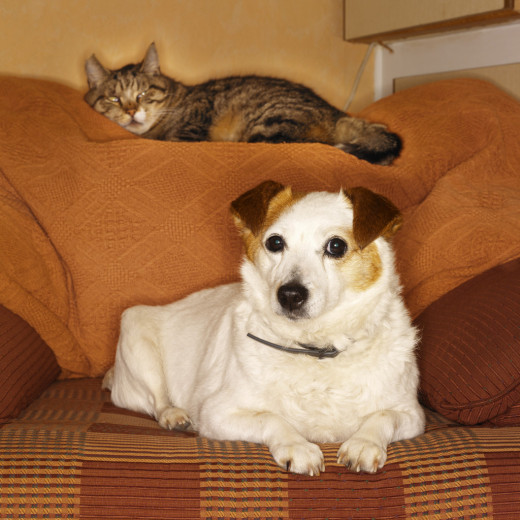 The other pets in your family may also show signs of grief and sadness when a furry friend dies.
